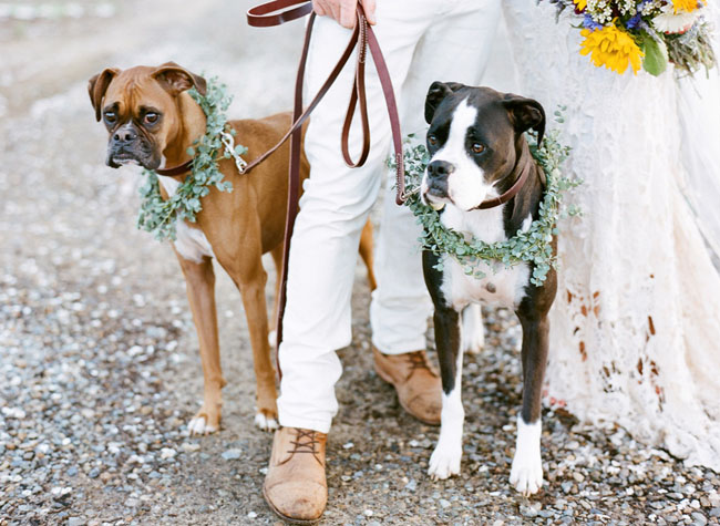 dogs-wearing-flower-wreath-bohemian-wedding